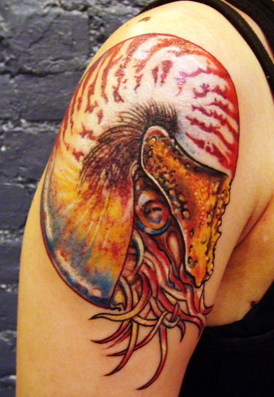 fractal color nautilus shoulder tattoo tribeca studio